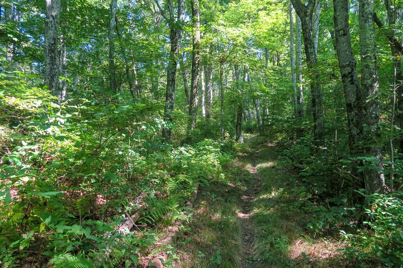 Mountains-to-Sea Trail -- 4,800'