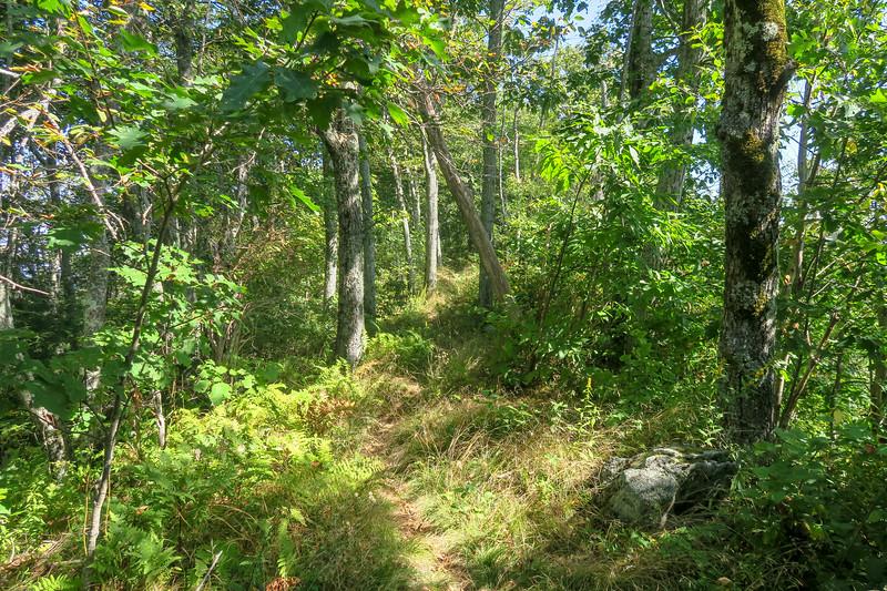 Mountains-to-Sea Trail -- 5,040'