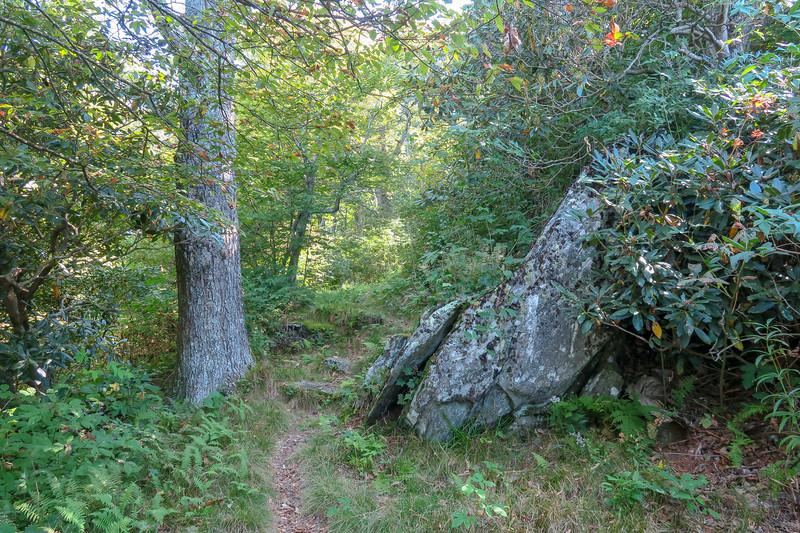 Mountains-to-Sea Trail -- 4,960'