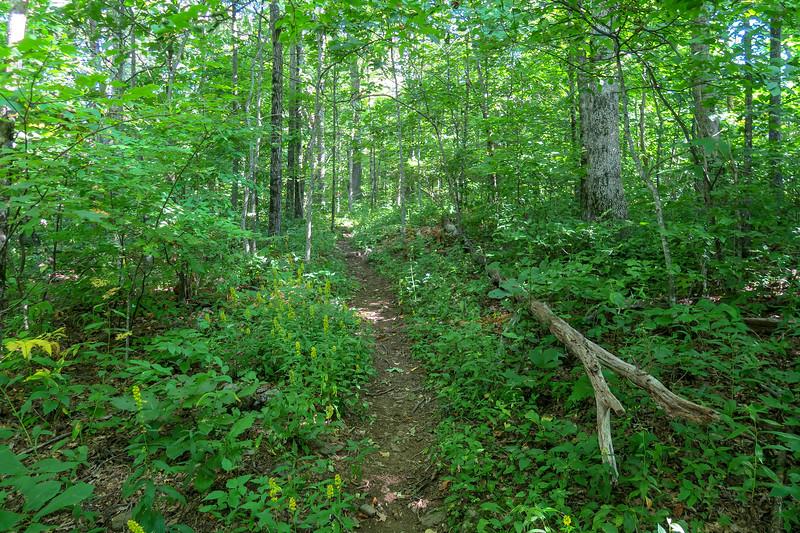 Mountains-to-Sea Trail -- 4,560'