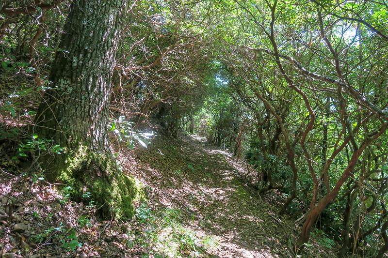 Mountains-to-Sea Trail -- 4,100'