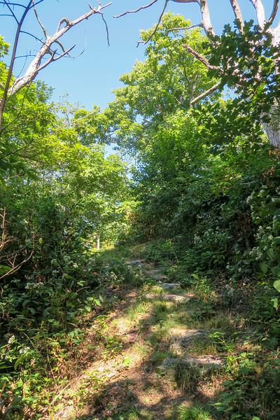 Mountains-to-Sea Trail -- 4,940'