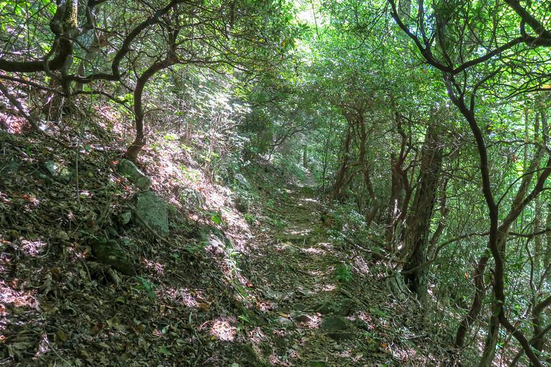 Mountains-to-Sea Trail -- 4,050'