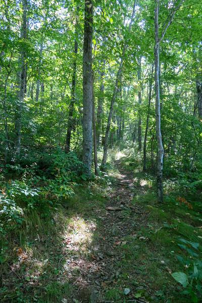 Mountains-to-Sea Trail -- 4,500'