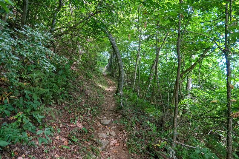 Mountains-to-Sea Trail -- 4,760'