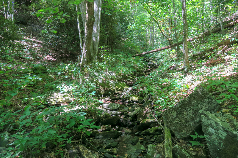 Mountains-to-Sea Trail @ South Tributary of Poplar Creek -- 4,020'