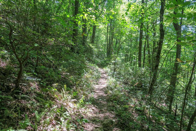 Mountains-to-Sea Trail -- 4,040'