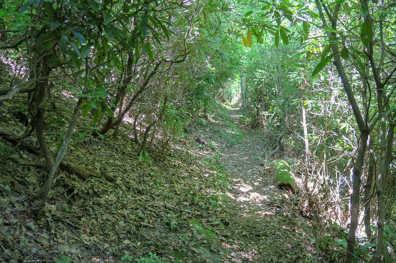 Mountains-to-Sea Trail -- 4,350'