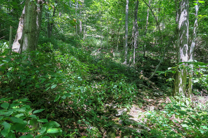Mountains-to-Sea Trail @ North Tributary of Poplar Creek -- 4,080'