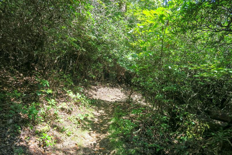 Mountains-to-Sea Trail -- 4,570'