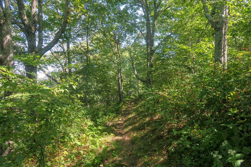 Mountains-to-Sea Trail -- 4,980'