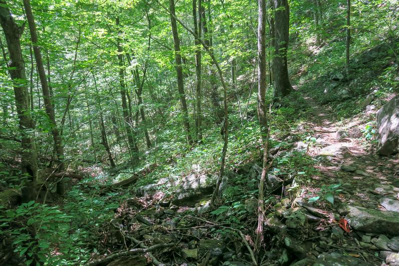 Mountains-to-Sea Trail -- 4,090'