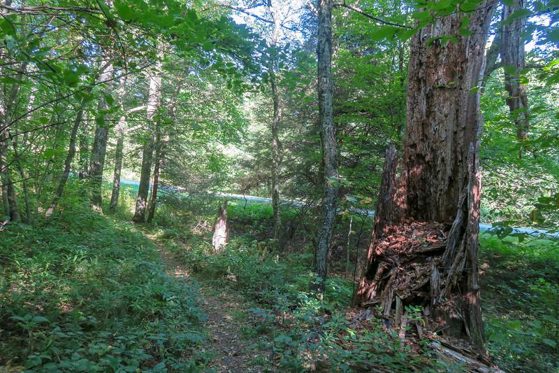 Mountains-to-Sea Trail -- 4,410'