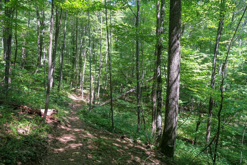 Mountains-to-Sea Trail -- 3,850'