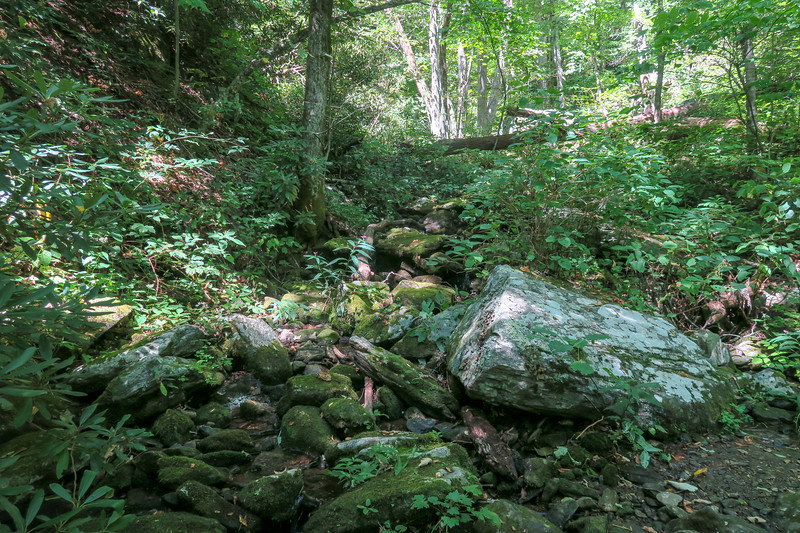Mountains-to-Sea Trail @ North Tributary of Barnett Branch -- 3,860'