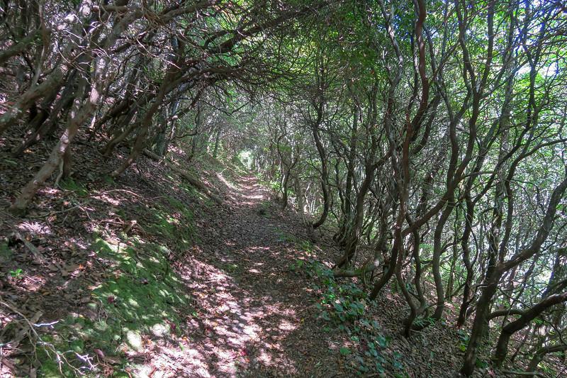 Mountains-to-Sea Trail -- 4,140'