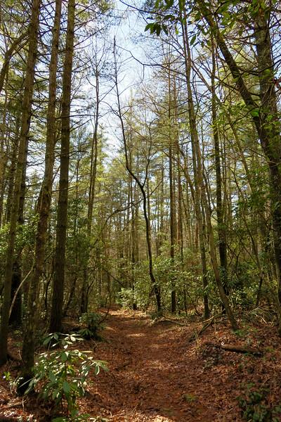 Mountains-to-Sea/Overmountain Trail -- 2,480'