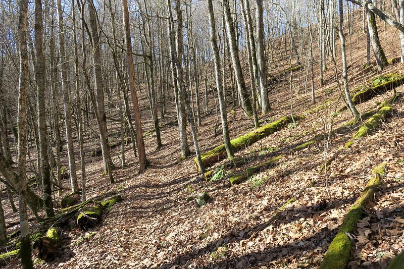 Mountains-to-Sea Trail -- 4,740'