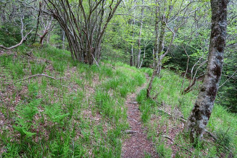 Mountains-to-Sea Trail -- 5,600'