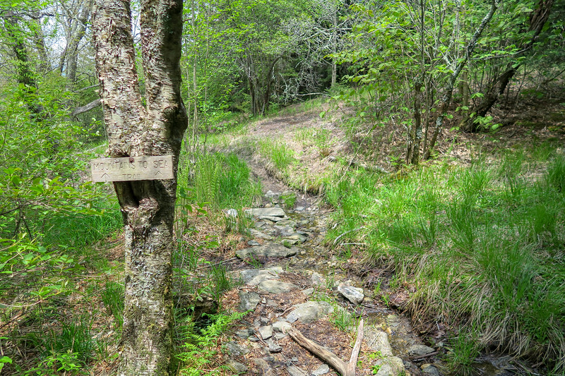 Mountains-to-Sea Trail/Mt. Hardy Spur Junction -- 5,760'