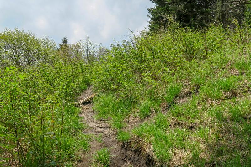 Green Mountain Trail/Fork Ridge Meadows Spur Junction -- 5,810'