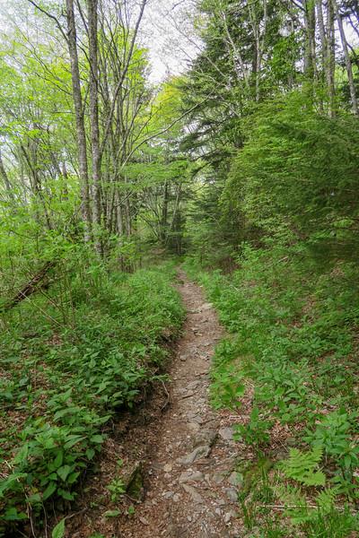 Mountains-to-Sea Trail -- 5,410'