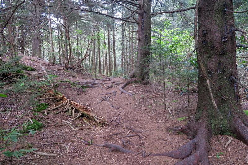 Green Mountain Trail -- 5,790'