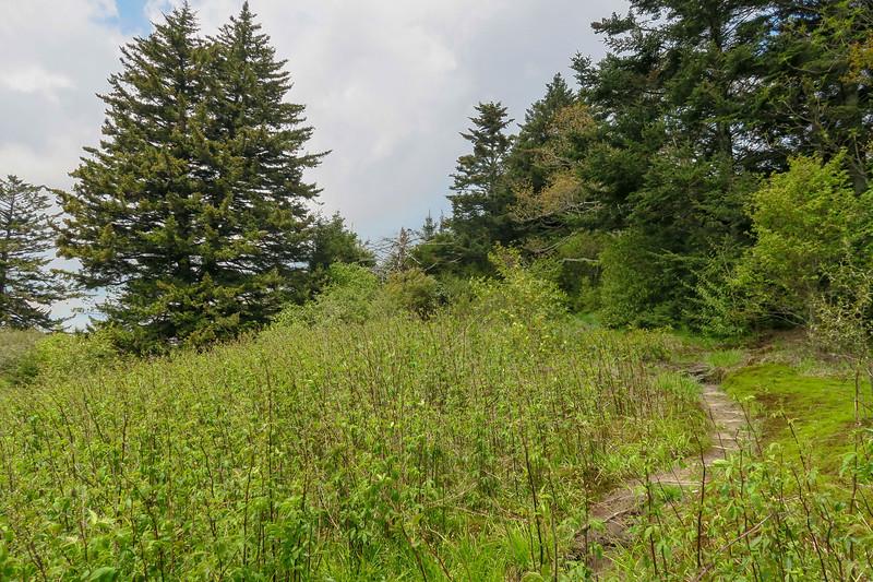 Fork Ridge Meadows Spur Path -- 5,820'