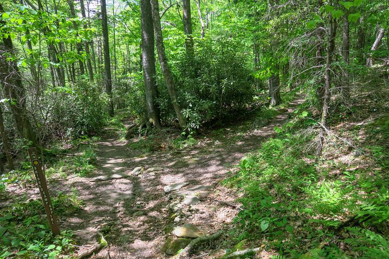 Mountains-to-Sea/Bridges Camp Gap Trail Junction -- 4,420'