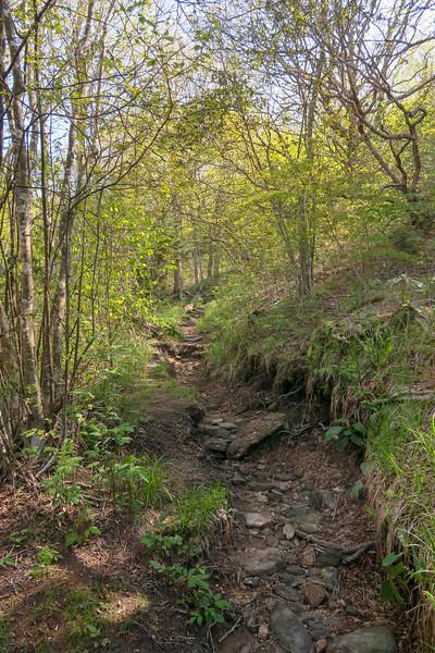 Mountains-to-Sea Trail -- 5,540'