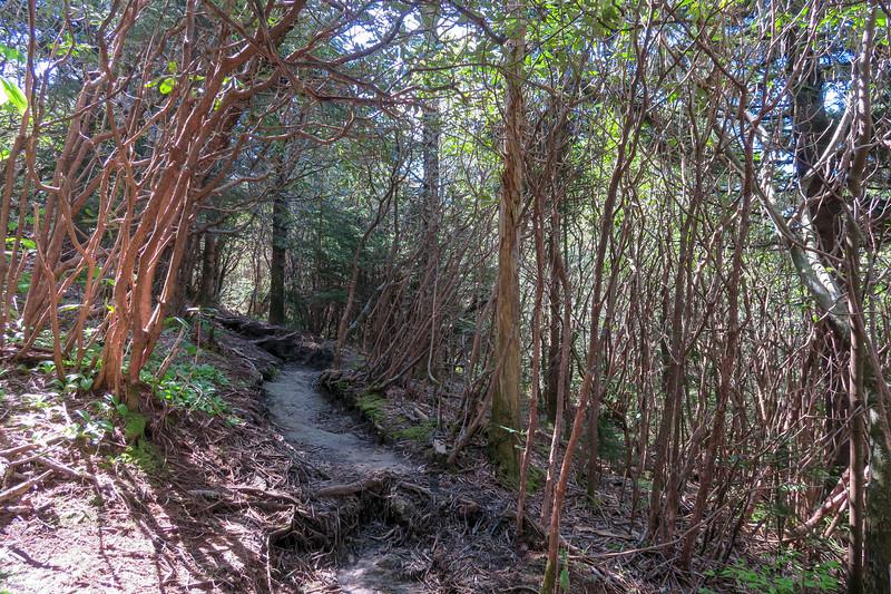 Mountains-to-Sea Trail -- 5,620'