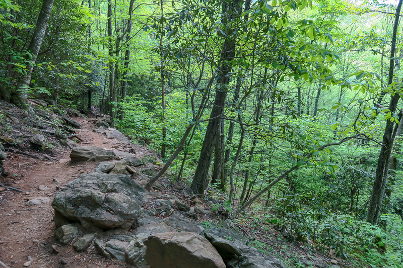 Mountains-to-Sea Trail -- 4,430'