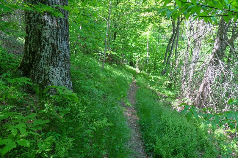 Mountains-to-Sea Trail -- 4,640'