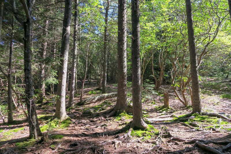 Mountains-to-Sea Trail -- 5,380'