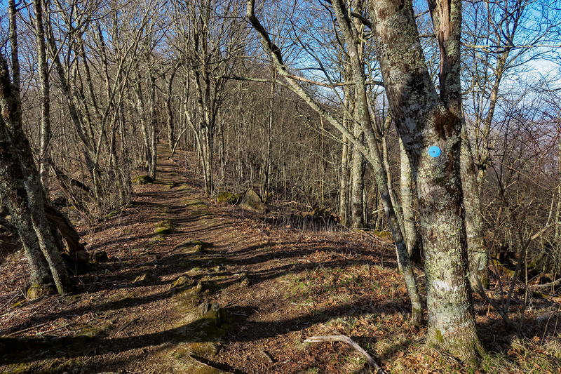 MST Access Trail -- 5,620'