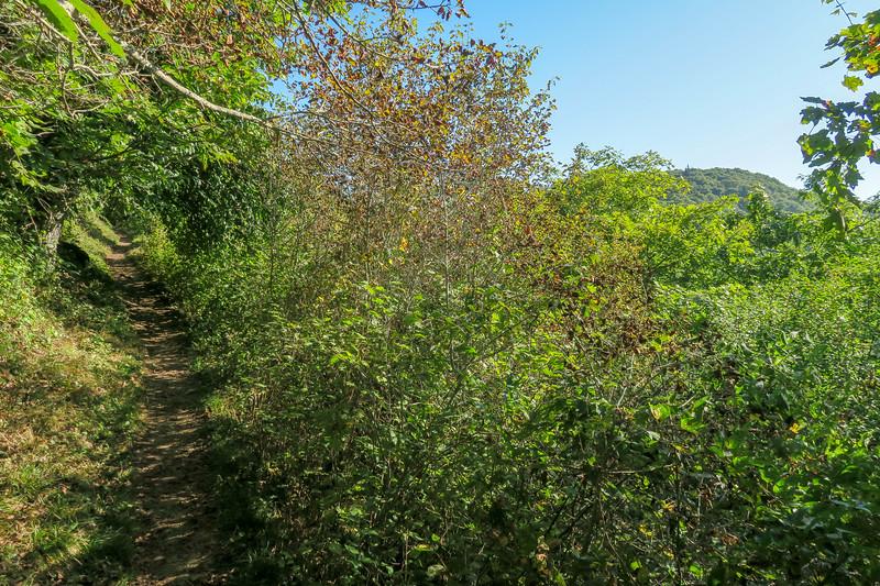 Mountains-to-Sea Trail -- 5,050'
