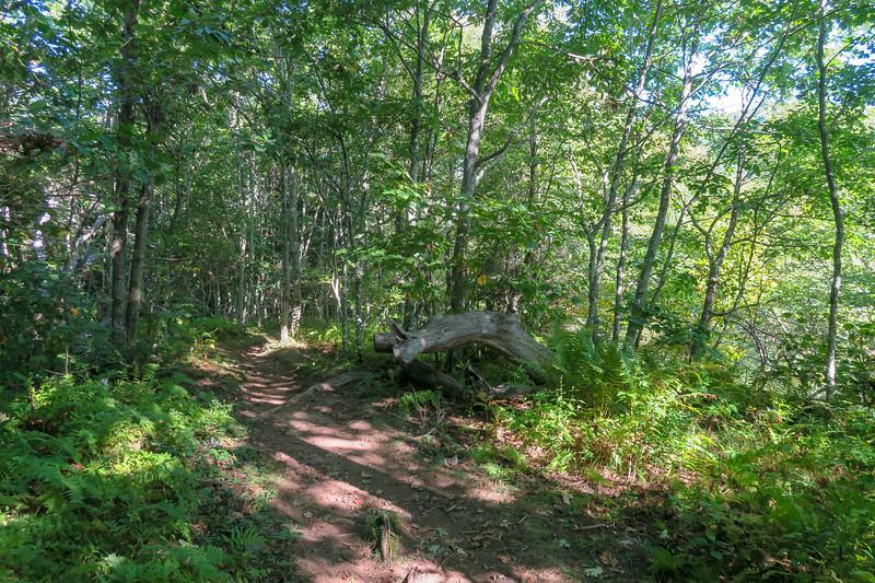 Mountains-to-Sea Trail -- 5,060'