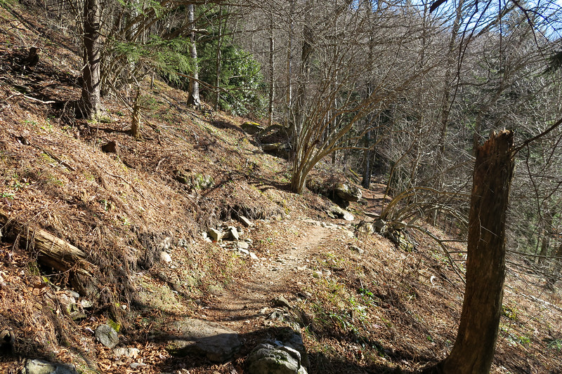 Mountains-to-Sea Trail -- 5,530'