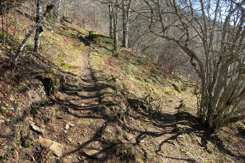 Mountains-to-Sea Trail -- 5,740'