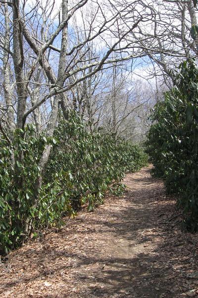 Appalachian Trail-F.R. 67 Spur Trail