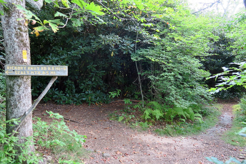 Bartram-Hickory Knut Trail Junction - 4,580'