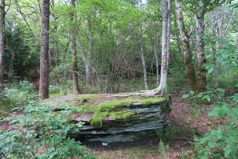 Bartram Trail - 4,680'