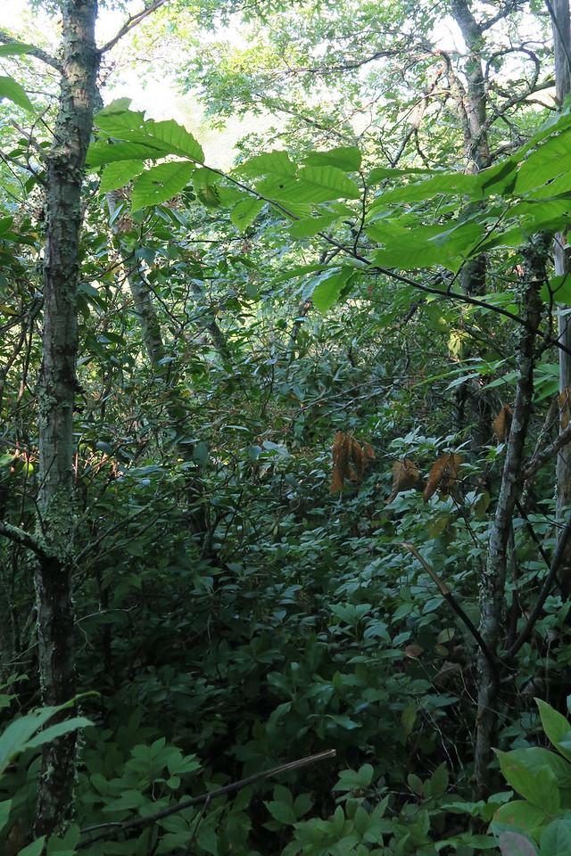 Catstairs Bushwhack - 4,100'