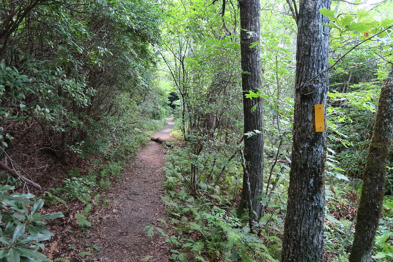 Bartram Trail - 4,480'