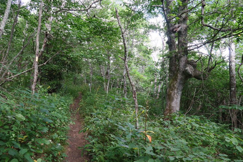 Bartram Trail - 4,650'