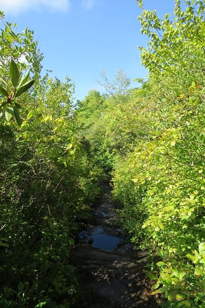 Bartram Trail - 4,550'