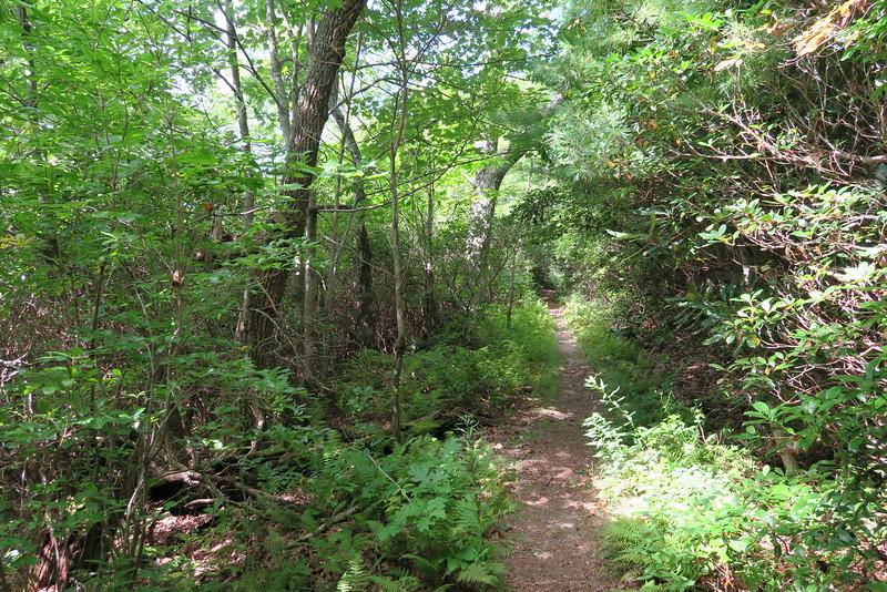 Bartram Trail - 4,400'