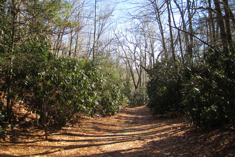 Salt Rock Gap Trailhead
