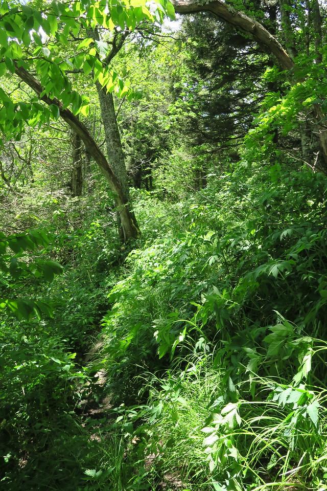 Blackrock Trail - 5,700'