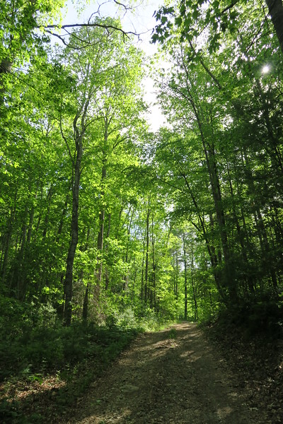Gray's Ridge Access Trail